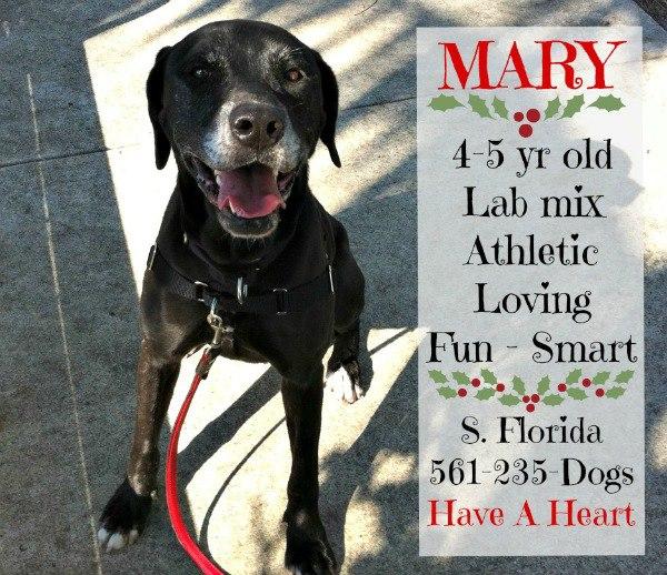 Mary needs a home!